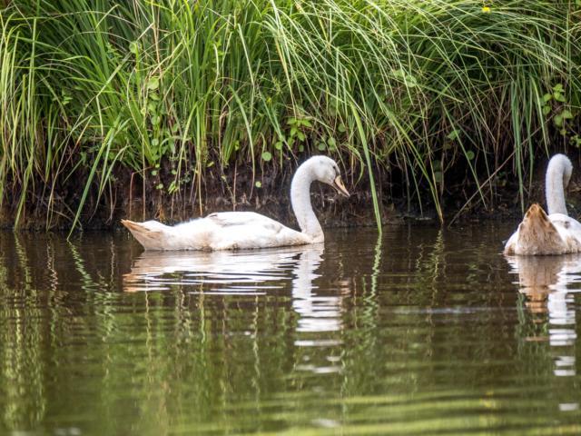 apero-oiseau-marais-de-briere-9.jpg