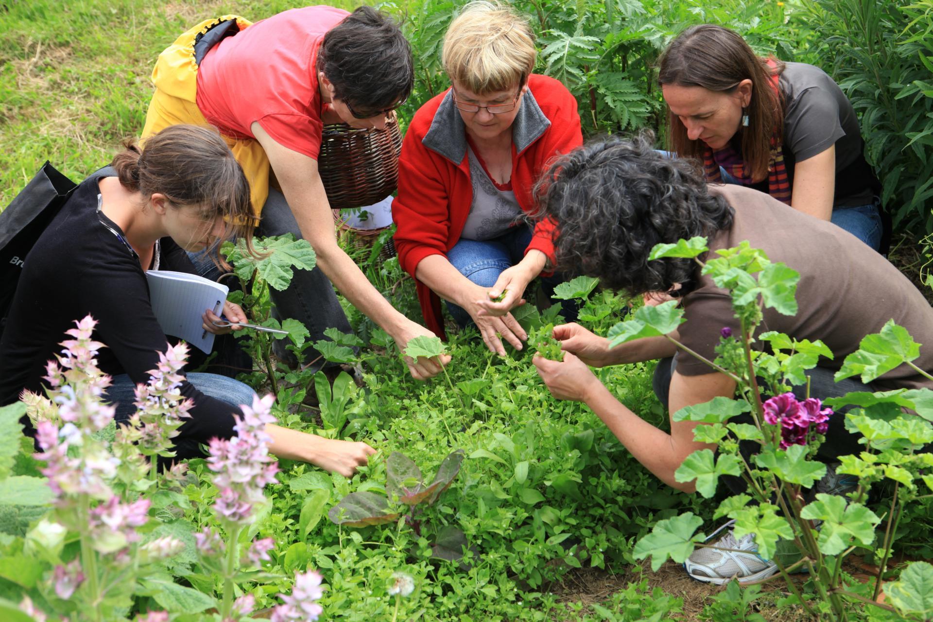guide des plantes sauvages comestibles les reconnaitre les recolter les consommer