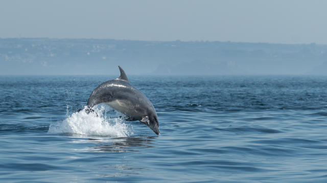 explorez-les-beautes-de-l-archipel-de-molene-5.jpg
