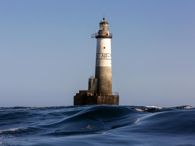 naviguez-aupres-des-dauphins-phares-et-oiseaux-13.jpg