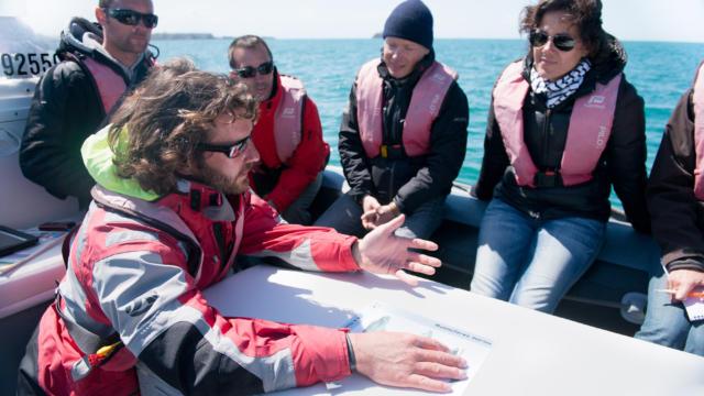 participez-a-l-observation-des-grands-dauphins-2.jpg