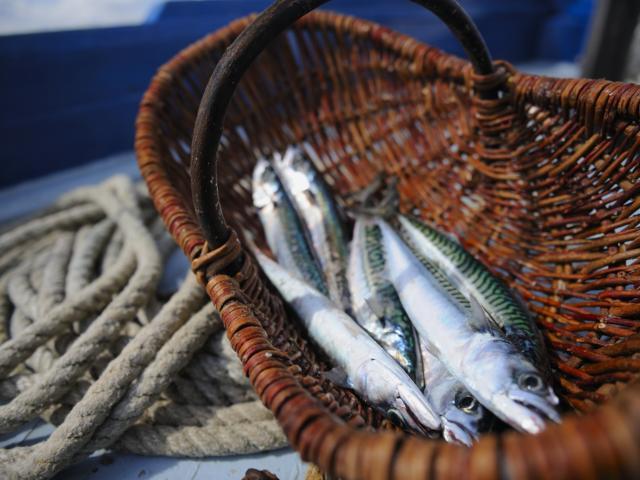 Pêche à la sardine sur la Marie-Georgette
