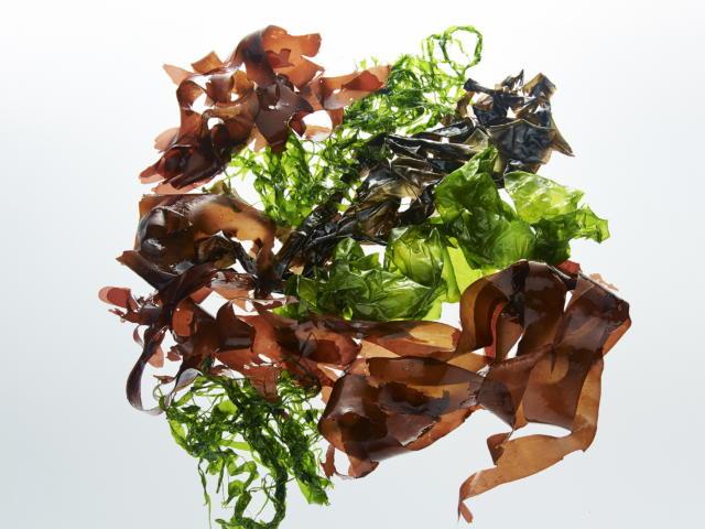 Thalasso Bretagne - Les vertus fortifiante de algues